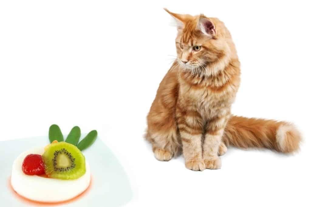 Can Cats Eat Vanilla Pudding
