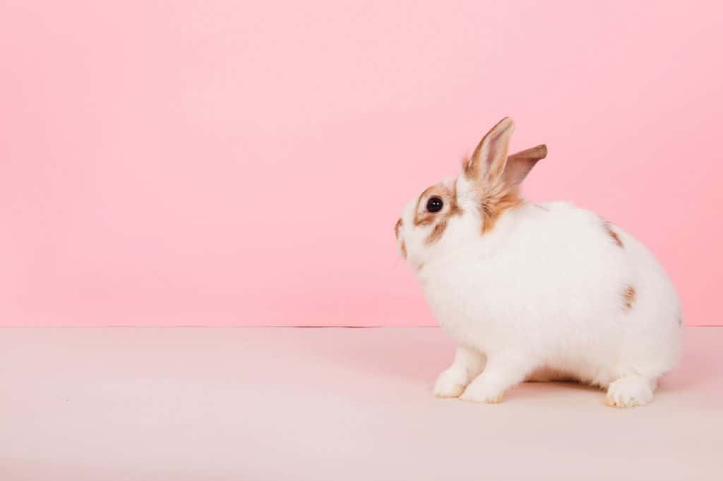 Do Rabbits Close Their Eyes When They Die
