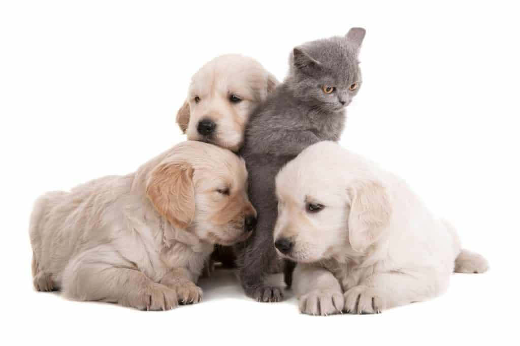 What Do Cats Think Of Dogs