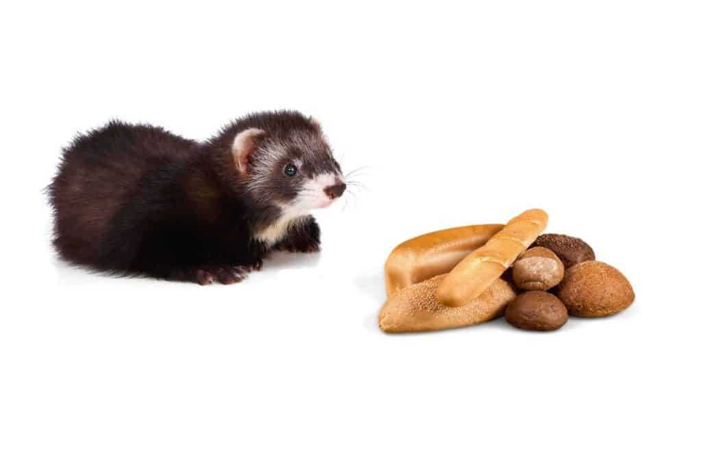 Can Ferrets Eat Bread